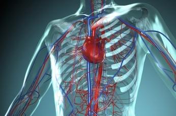 padaryti geresnę širdies sveikatą)