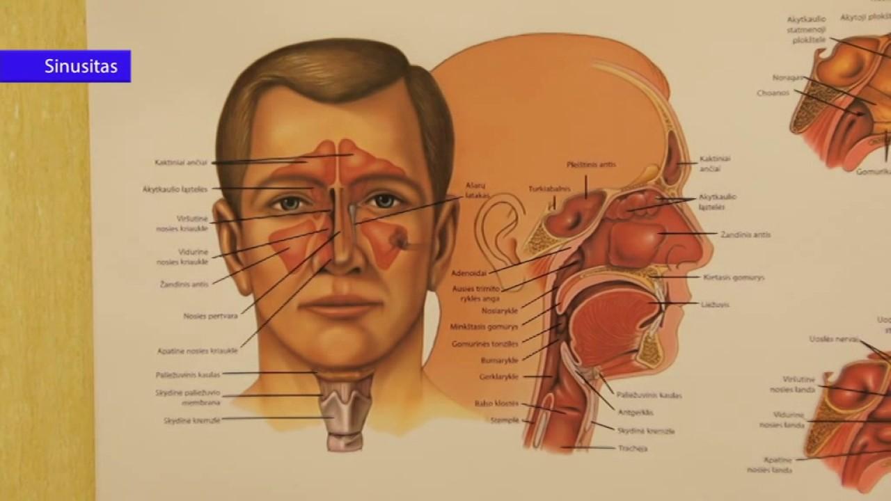 Pulsuojantis spengimas ausyse ir svorio kritimas. Mūsų draugai