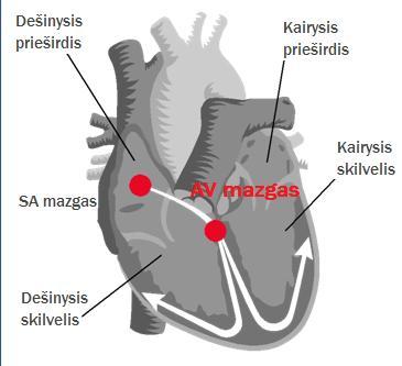 aspektas sveikatos širdies skilvelis