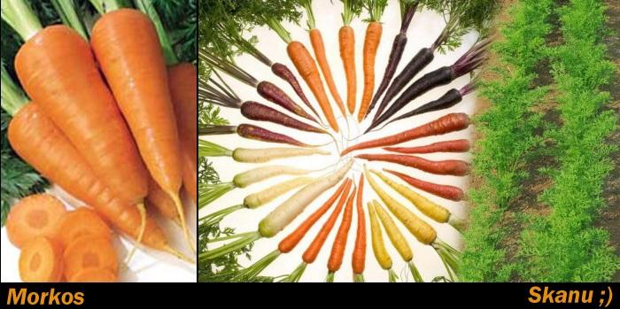 Stebuklinga morkų galia