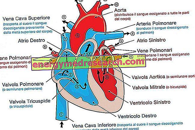 aerobinė širdies sveikata