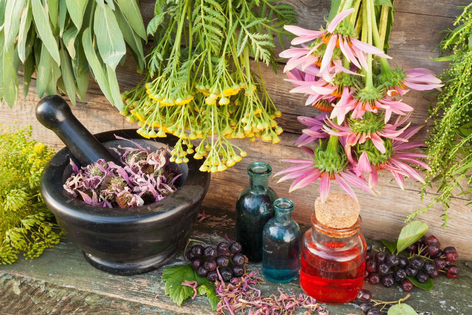 augalai, vartojami hipertenzijai gydyti)