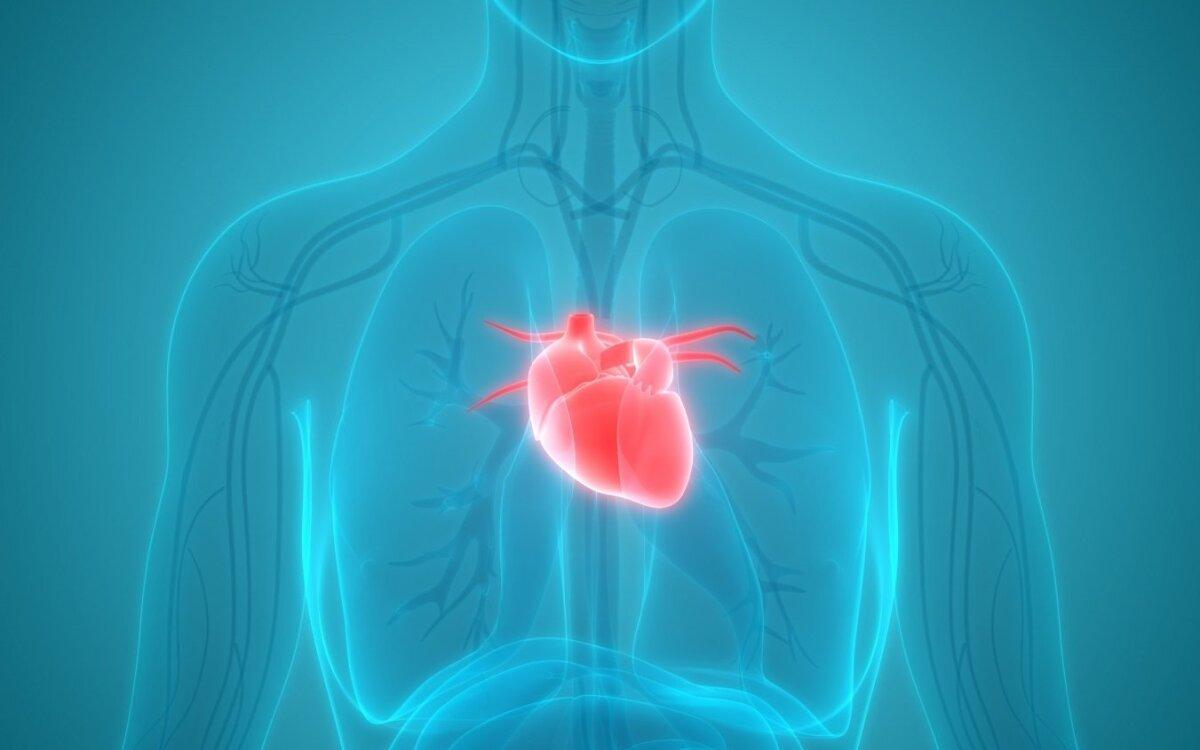 viršūnė sveikatos stazinė širdis)