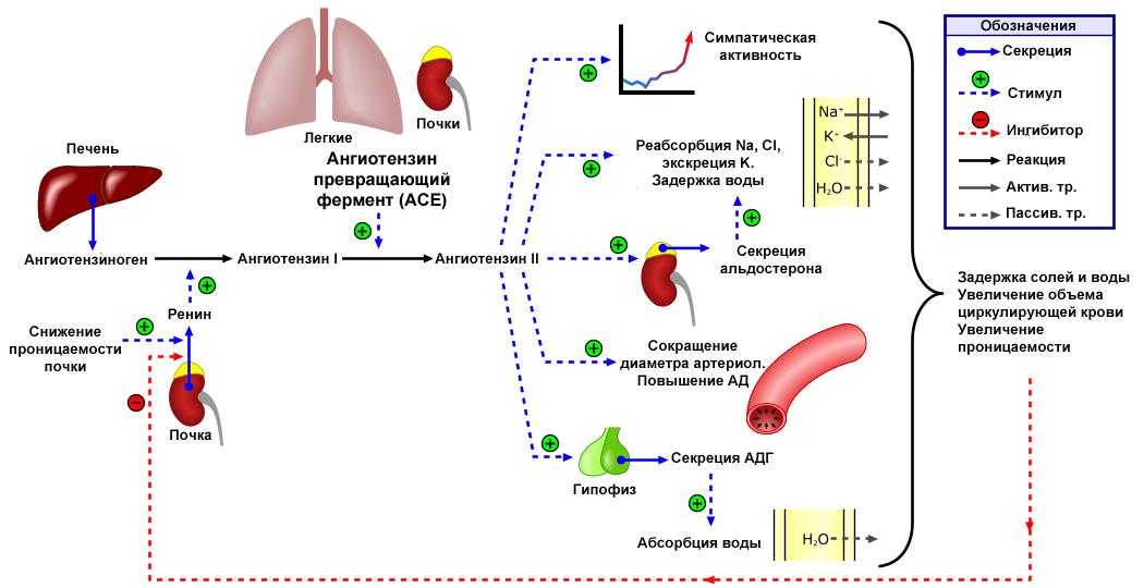 hipertenzija 3 laipsnio 1 pakopos rizika 2)