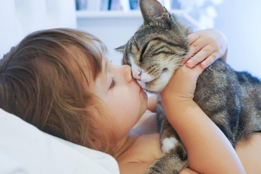 Murkiantys gydytojai – katės - DELFI Gyvenimas