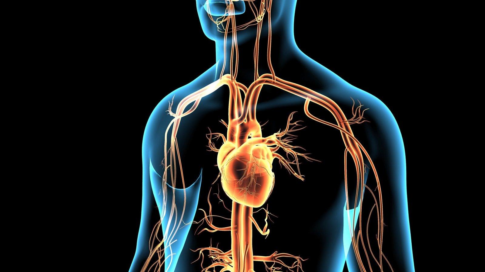 sveikatos problemų, susijusių su širdies ligomis kaip yra inkstų hipertenzija
