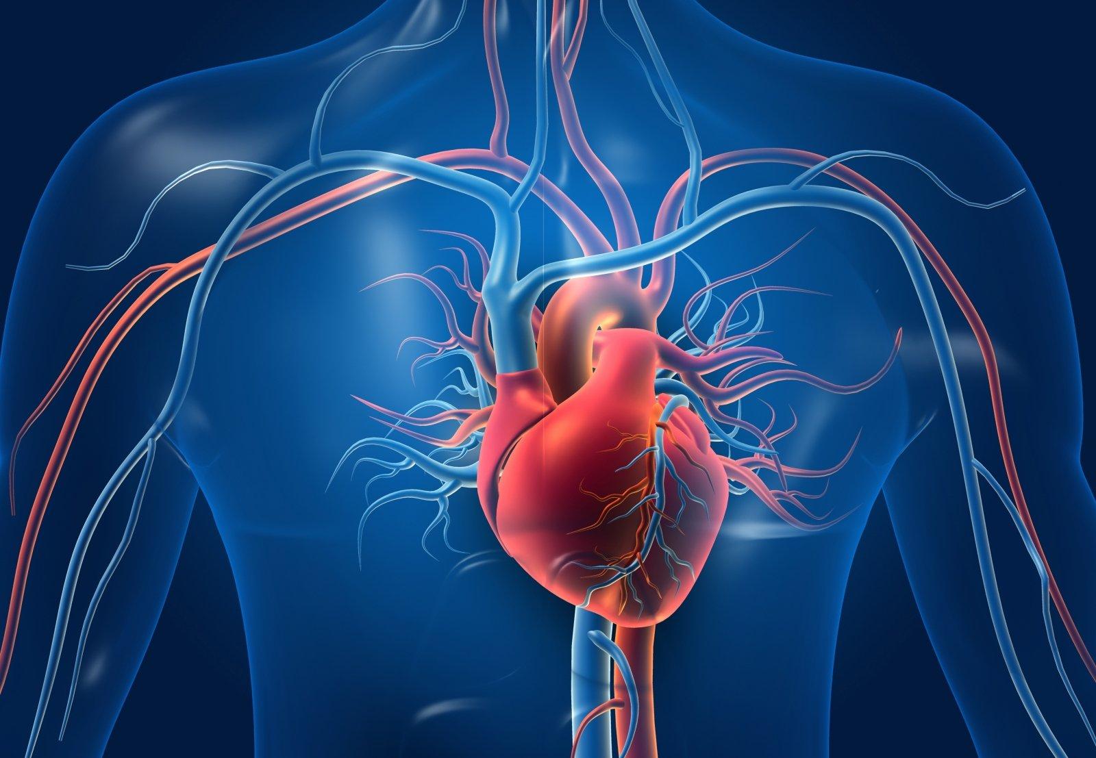 širdies ritmo tikslinė širdies ir kraujagyslių sveikata)