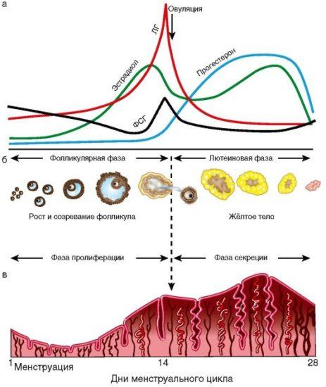 menstruacijos ir hipertenzija