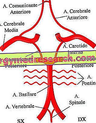 hipertenzija stuburo arterijos sindromas)