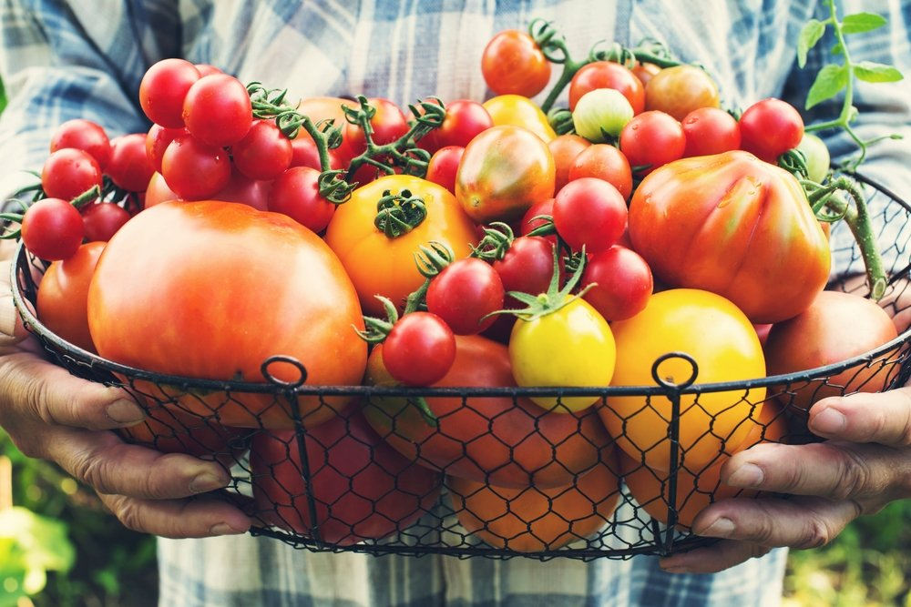 ar galima valgyti pomidorus su hipertenzija)