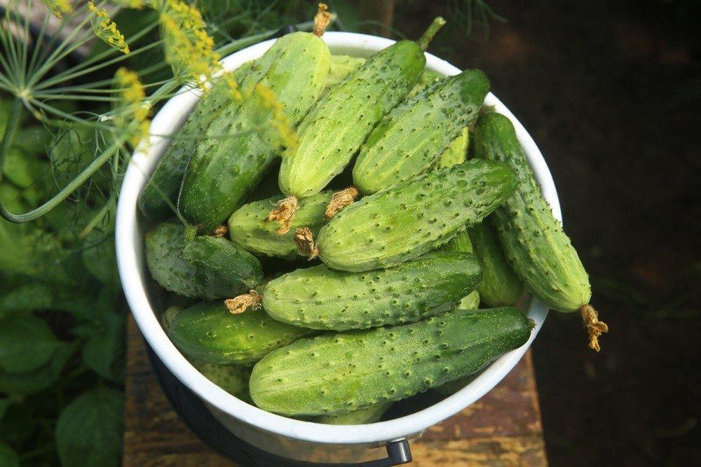 švieži agurkai nuo hipertenzijos