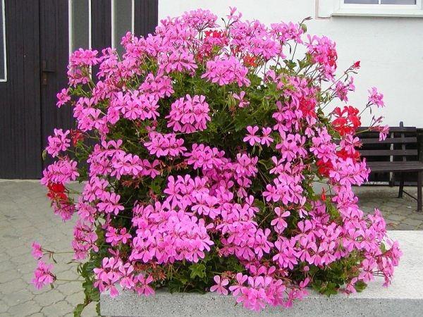 Kambarinės gėlės – interjero dalis » SAVAITĖ – viskas, kas svarbu, įdomu ir naudinga.
