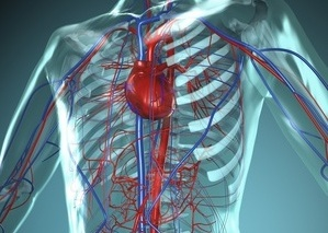 kraujagyslės susiaurėjusios dėl hipertenzijos)