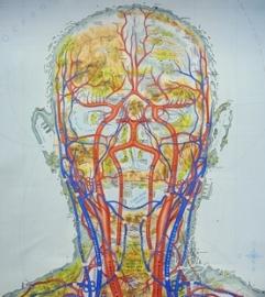 galvos širdis rankų sveikatos iliustracijos