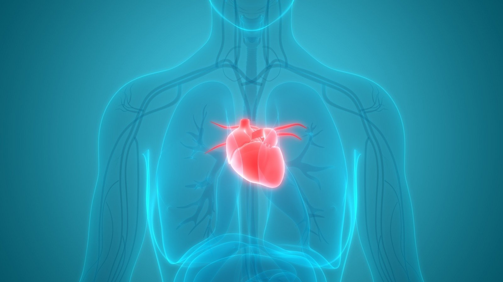 galvos sveikata širdis