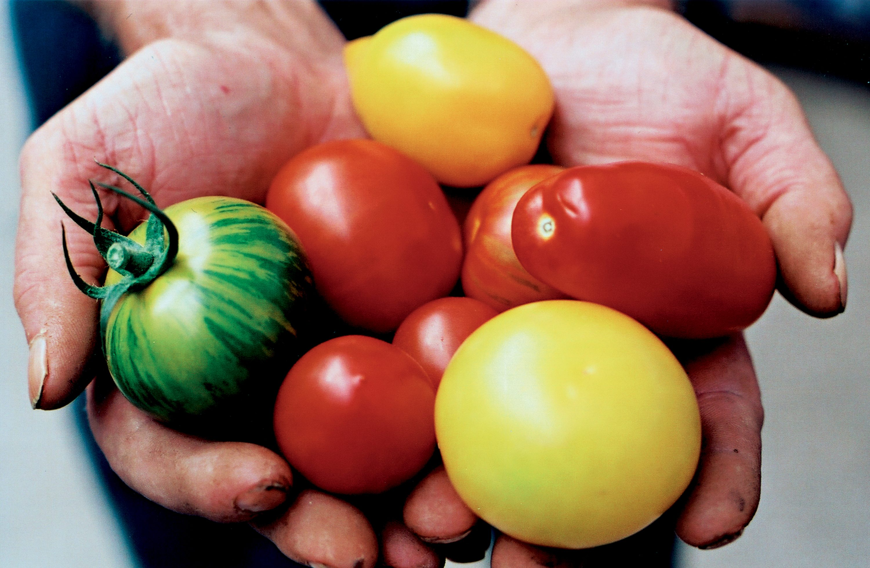 sergant hipertenzija, galima valgyti pomidorus