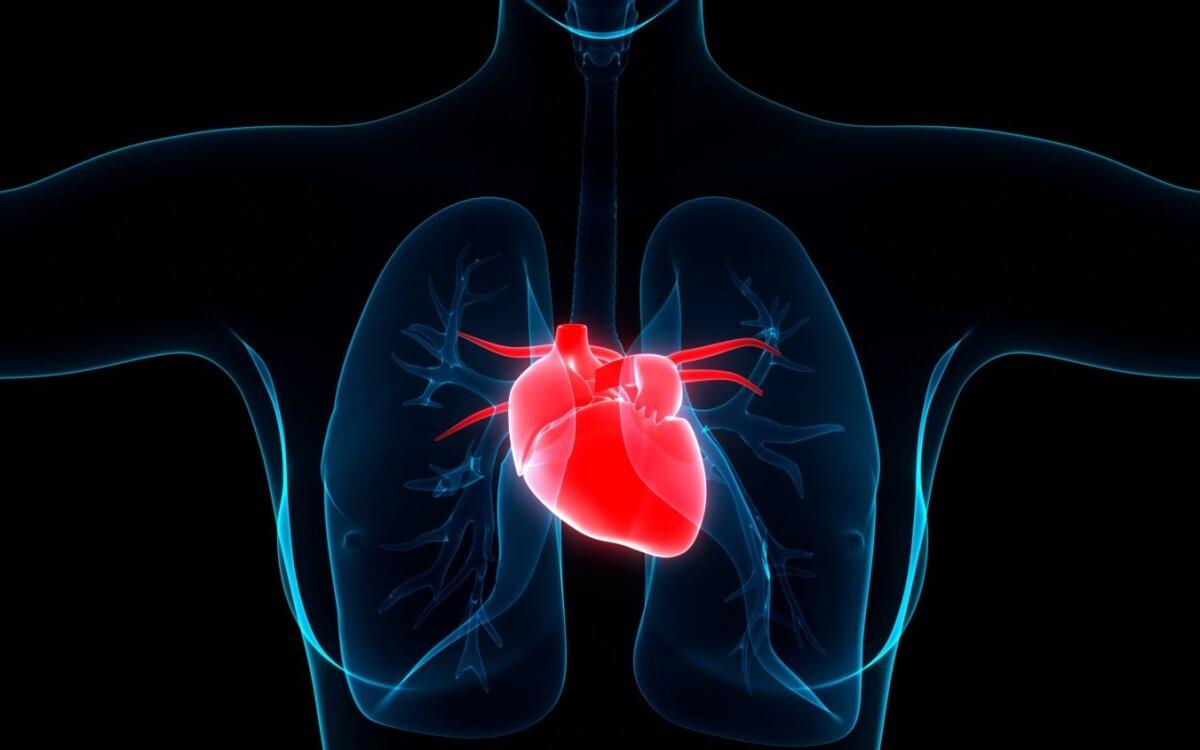 geriausia širdies sveikata)