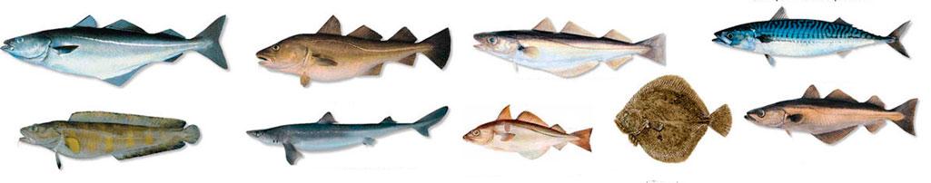 kokia žuvis tinka hipertenzijai)