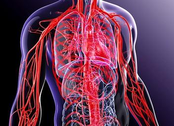 kraujagyslės su hipertenzijos simptomais