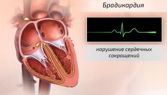 natūralios sveikatos organika širdies vieta