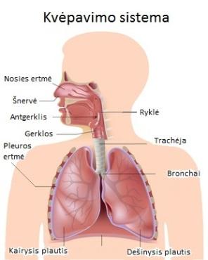 tuberkuliozė ir hipertenzija