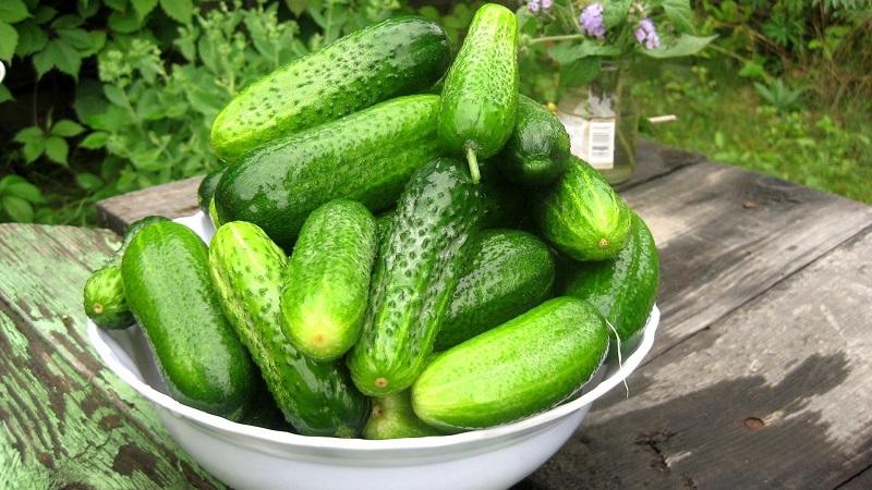 švieži agurkai nuo hipertenzijos)