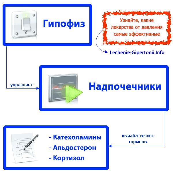 vienašalė hipertenzija)