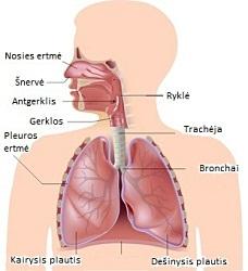 hipertenzija ir gumulas gerklėje