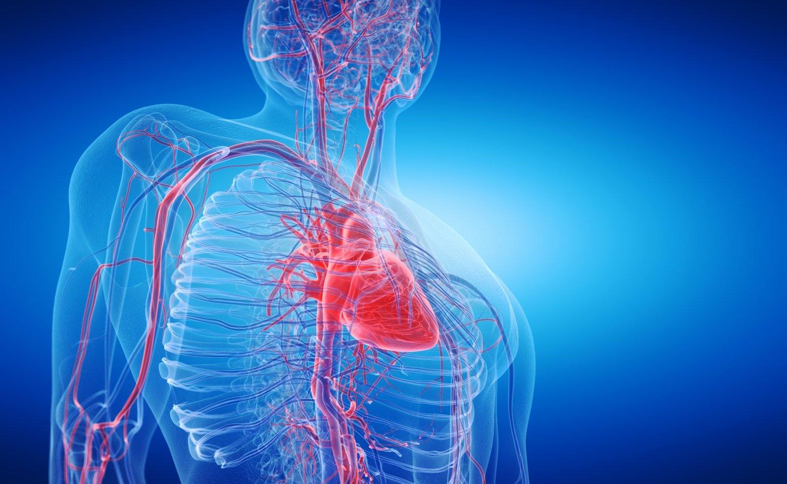 širdies dydis sergant hipertenzija