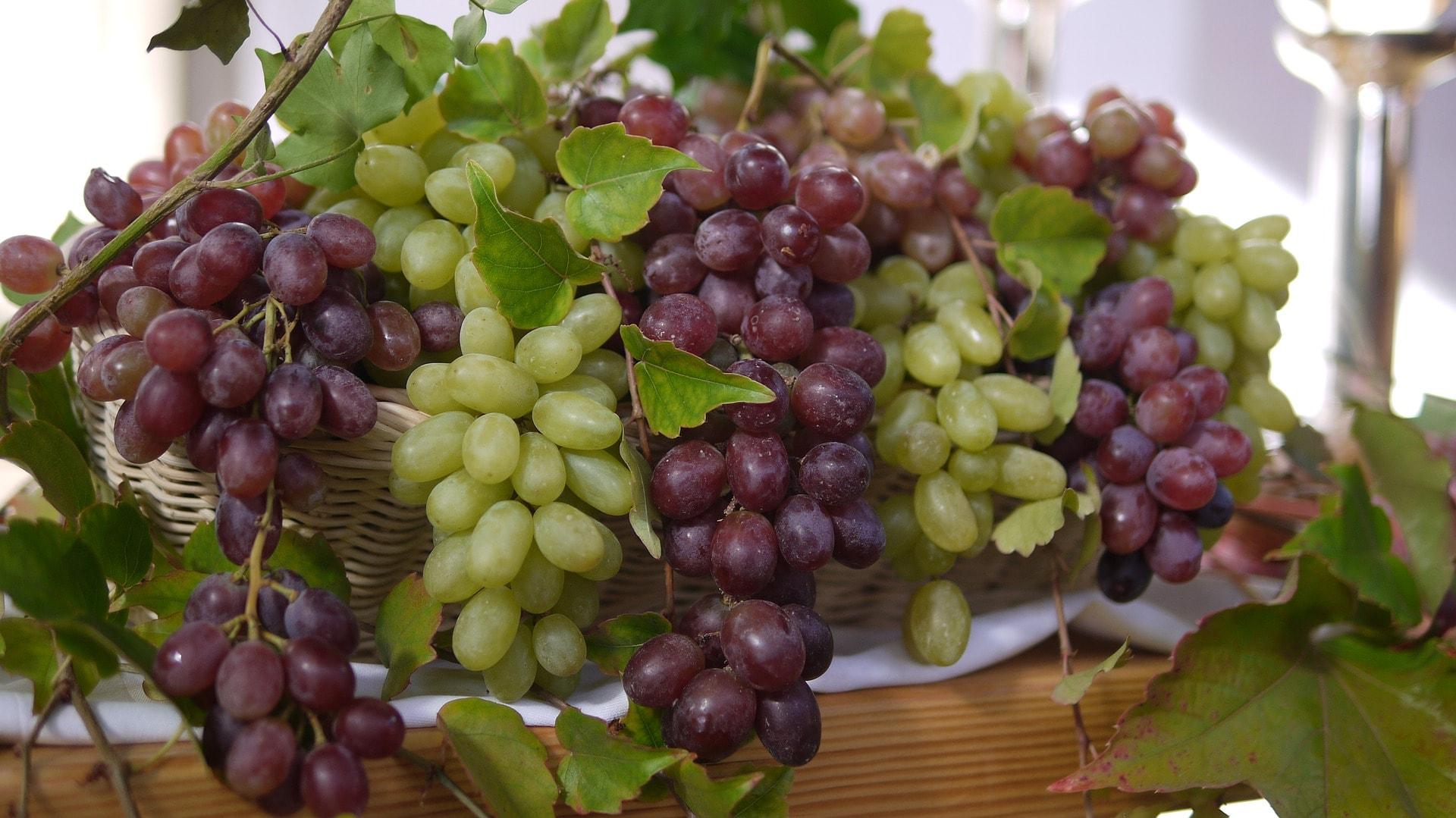 geriausios vynuogių sultys širdies sveikatai hipertenzija nei žemesnis kraujospūdis