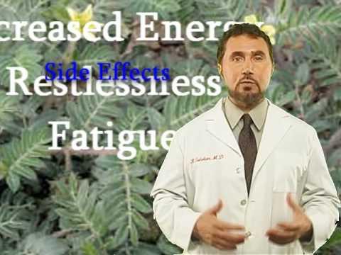 tribulus hipertenzija)