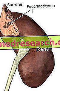 feochromocitomos hipertenzija)